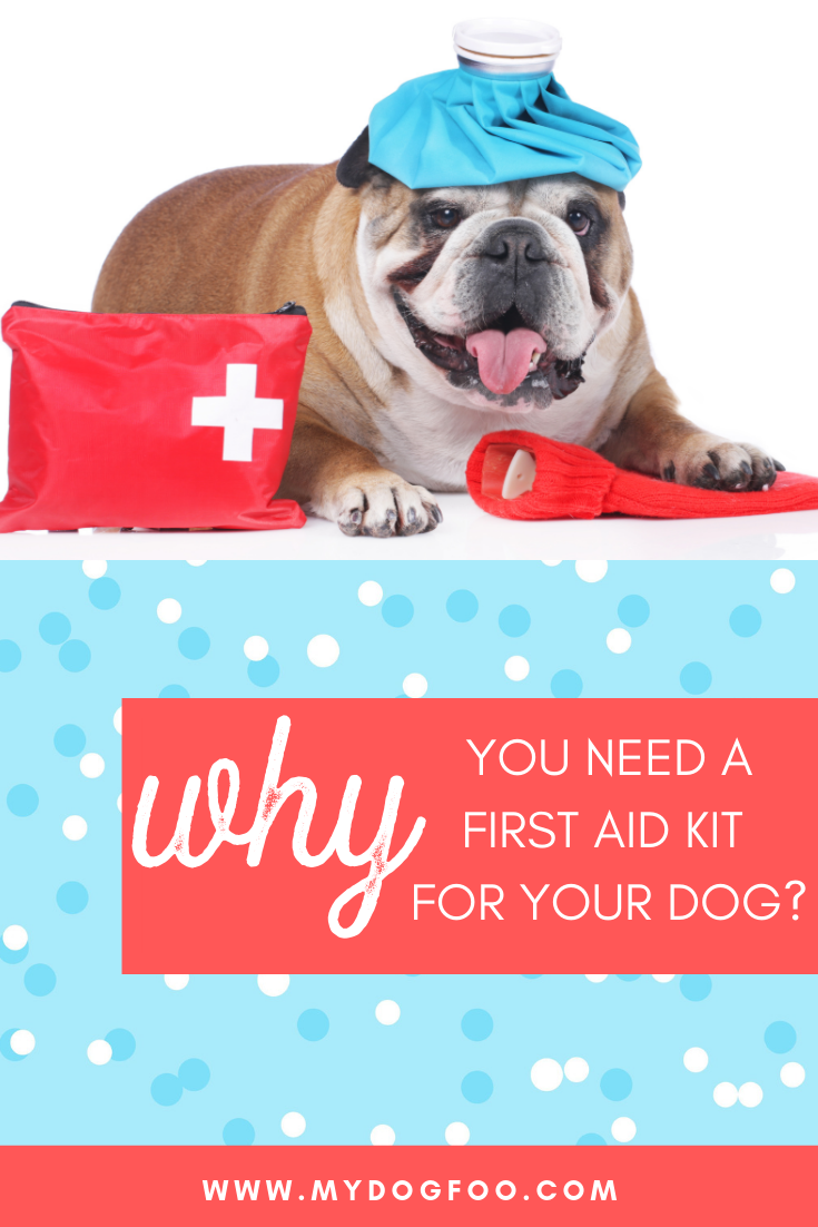 First Aid Kit For Dogs | Why You Need One