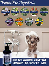 CLEANSING DOG SHAMPOO | BLACK LABEL