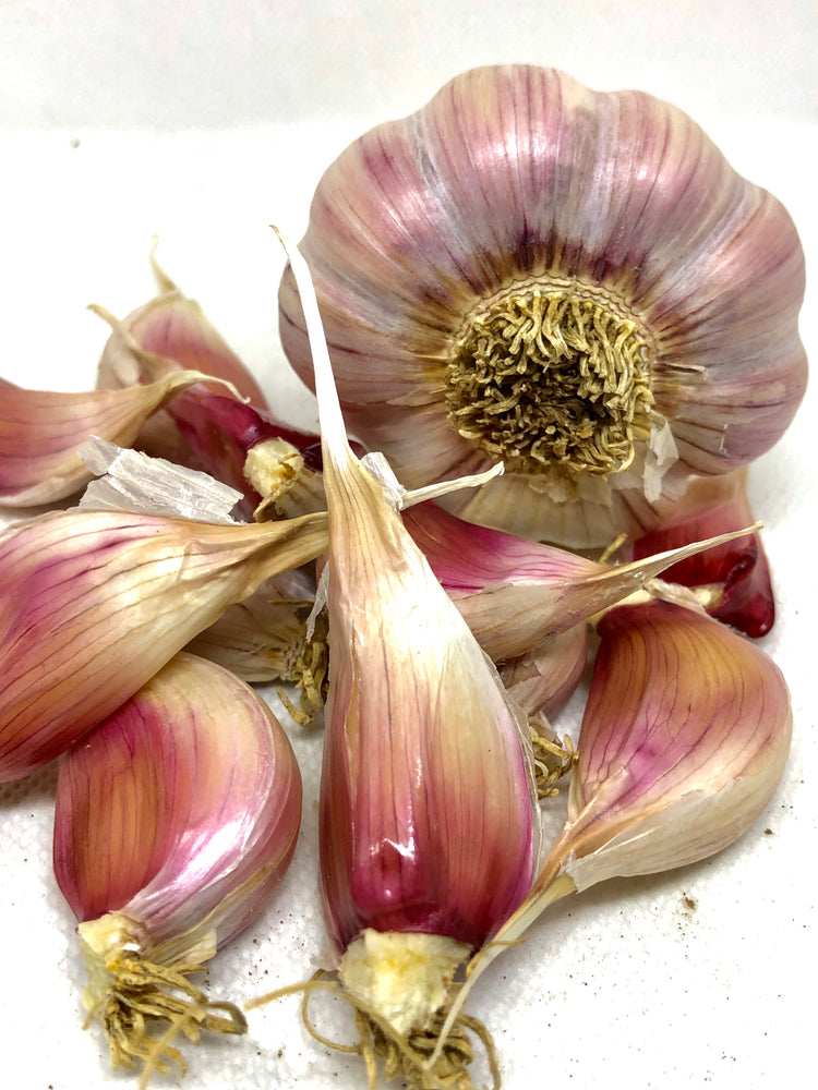 Chesnok Red Purple Stripe Garlic