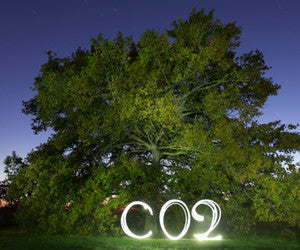 Oak tree with CO2 Emissions FSC