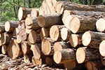 Ghana Ready to Implement Legal Timber Agreement