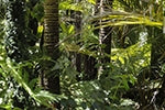 73 Million Trees Are Being Planted To Resurrect Brazil's Tropical Forests