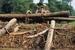 Designer furniture retailer Lombok becomes first UK company to be fined under illegal logging laws