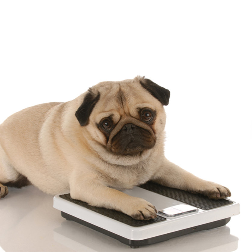 Weight Management Tips for Dogs