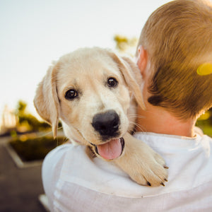 Socializing your puppy — why it matters