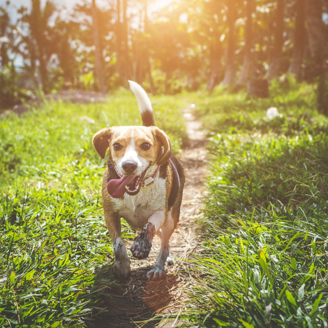 Exercise for dogs 101: Keeping your pup in shape