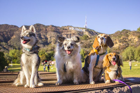 Happy pups at Runyon Canyon