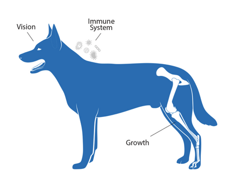 Dogs Body: Vision, Growth, Immune System