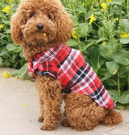 Plaid Shirt With Button -Dog Apparel