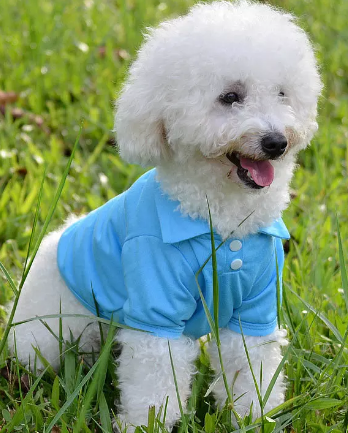 Dog Polo Shirt- Dog Apparel