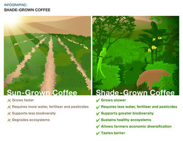 Haste Makes Waste: Sun-Grown Coffee
