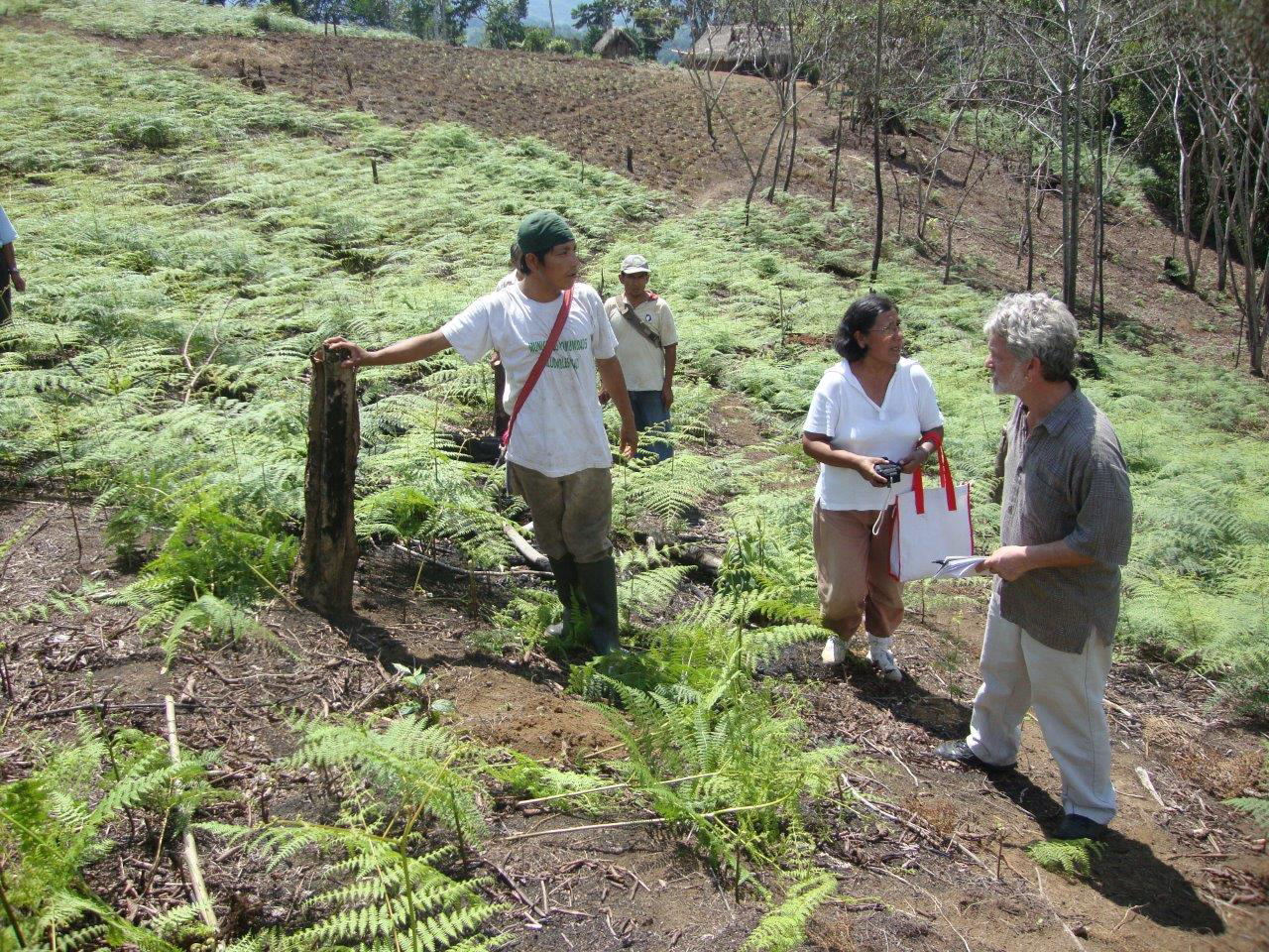 Our reforestation efforts in Peru help create carbon-neutral coffee.