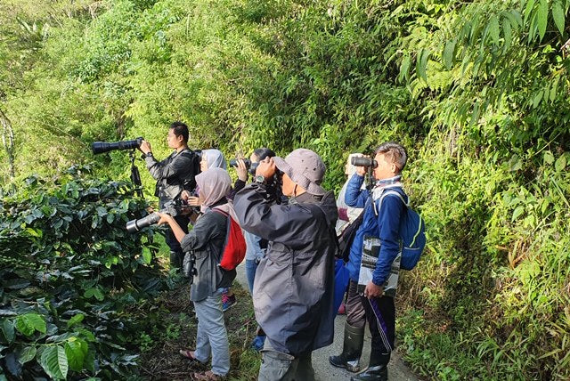 Bird Surveying in Sumatra