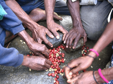 HULLING BEANS BY HAND IN PAPUA NEW GUINEA