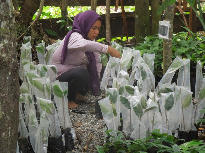 Reforestation means nurseries, seedlings and thousands of replantings.