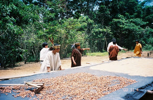 Indigenous farmers working next to a bed of drying coffee, with a forest behind them