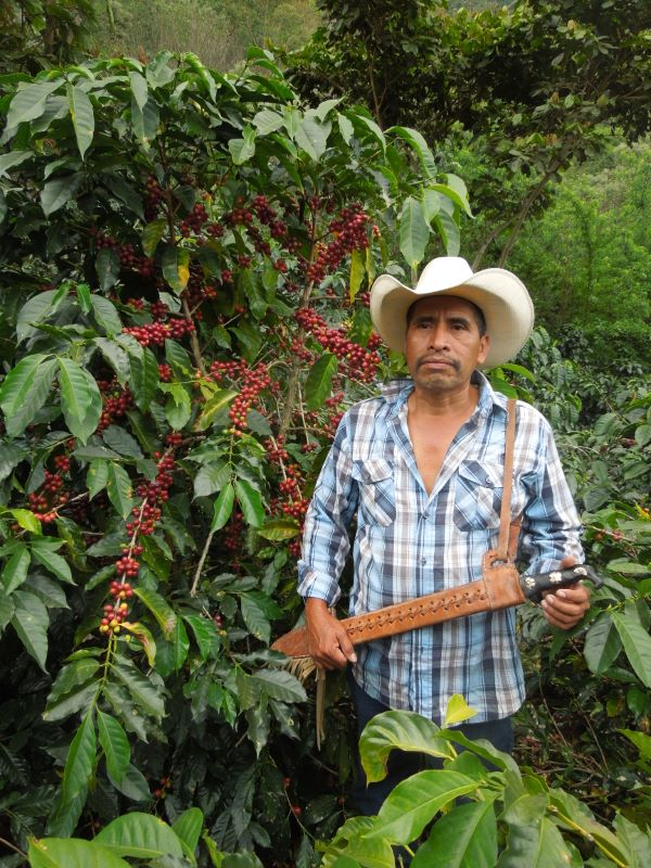 A man wearing a cowboy hat standing next to a coffee tree abundant with cherries