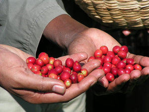 Organic Ethiopian Green Coffee (Unroasted)