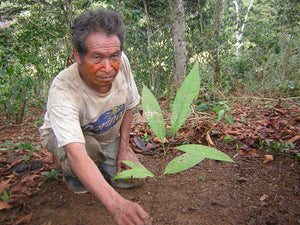 A farmer showing off the coffee seedling he just planted