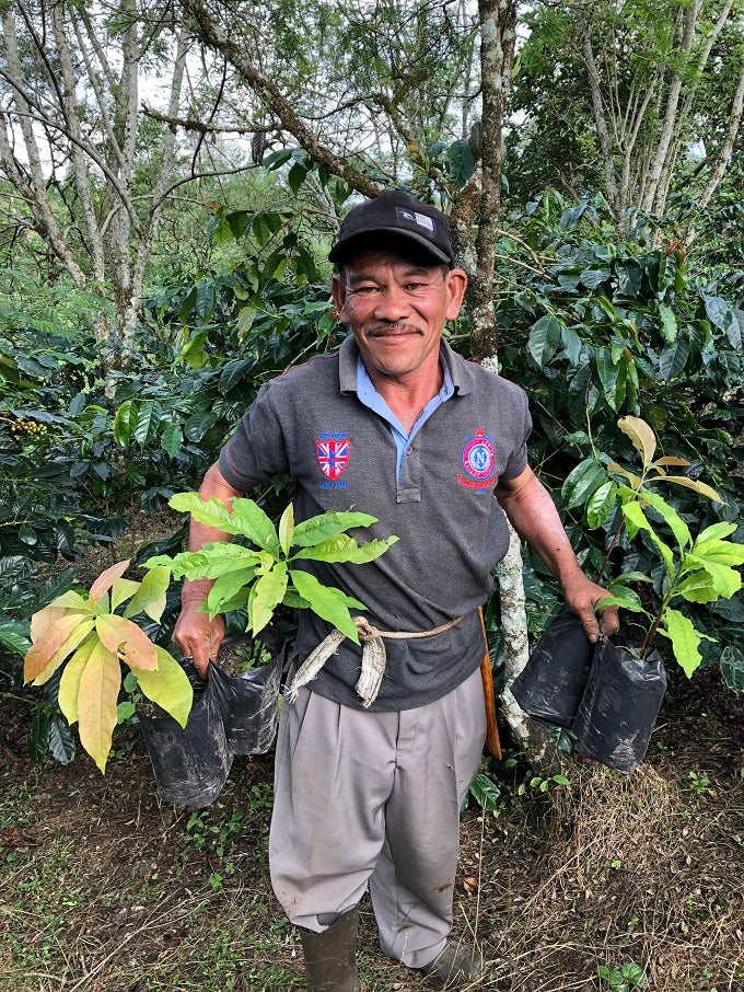 A farmer holding two coffee plant seedlings in front of a forest