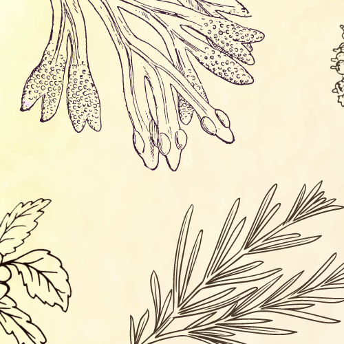 5 Uplifting Herbs for Mental Wellness