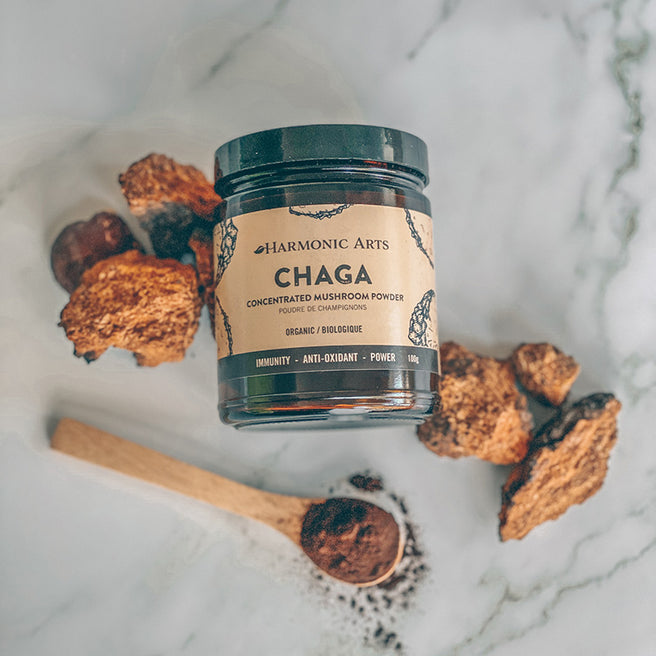 A container of Harmonic Arts Chaga Concentrated Mushroom Powder sits among numerous chaga mushrooms.