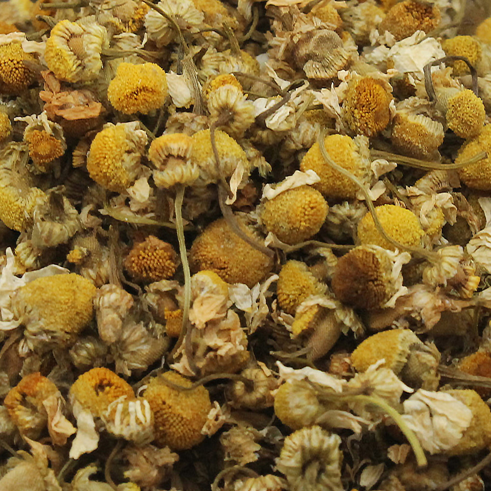 A closeup of loose Chamomile