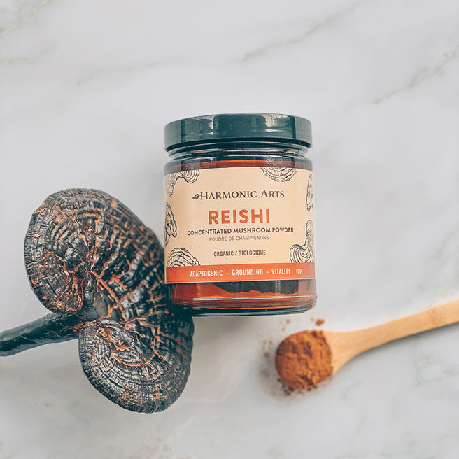 A container of Harmonic Arts Reishi Concentrated Mushroom Powder sits among numerous Reishi mushrooms.