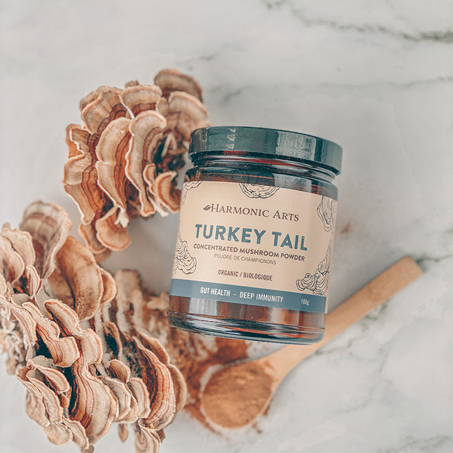 A container of Harmonic Arts Turkey Tail Concentrated Mushroom Powder sits among numerous Turkey Tail mushrooms.