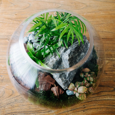 Fish Bowl Terrarium Large