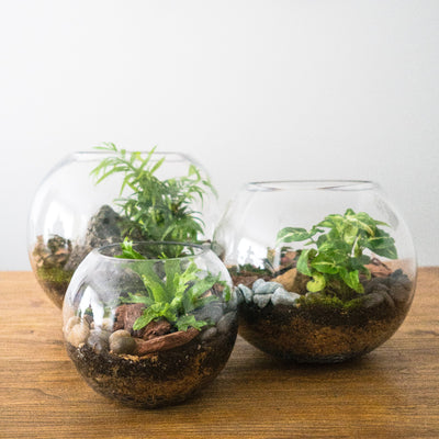 Fish Bowl Terrarium Medium