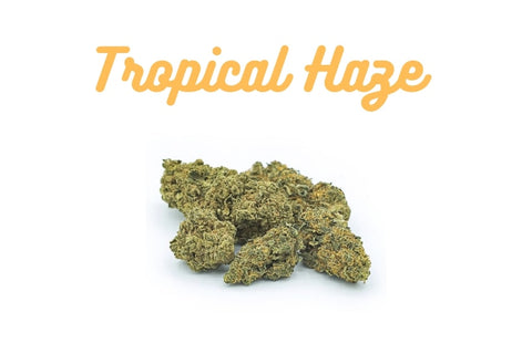 Tropical Haze 7% CBD