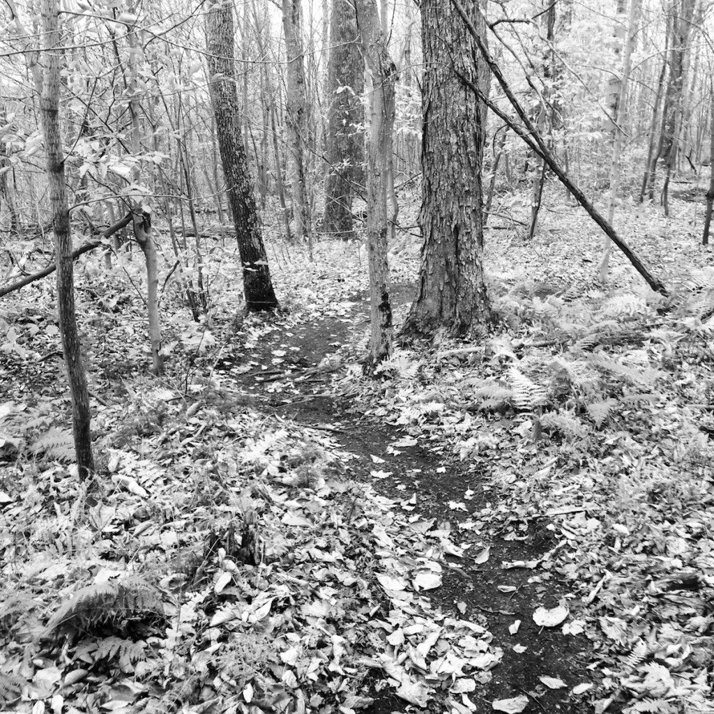 ursa-major-november-2013-singletrack-hinesburg-town-forest