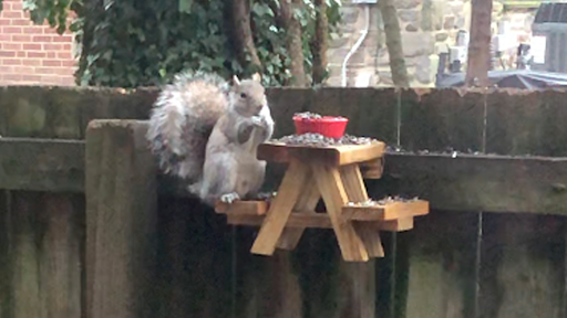 Man in Quarantine Builds Picnic Table for Squirrels and it's Very Cute