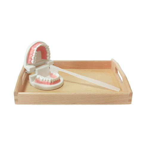 Wooden Tooth Brushing Toy - Branch & Leaf