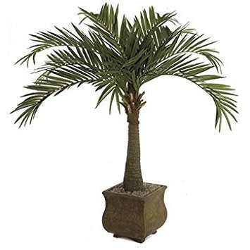 Roystonea Regia Royal Palm Tree 10 Seeds #House Plant