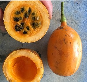 10 Seeds Cayaponia sp. 'El Oro' Orange Fruit Vine Plant #Fruit