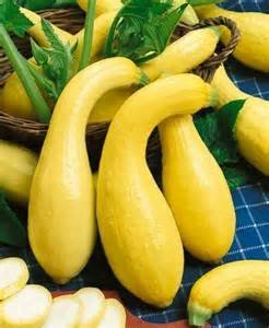 Cucurbita pepo Golden Summer Crookneck Squash Plant 25 Seeds #Vegetable