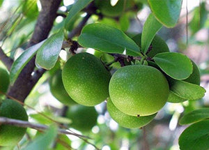 Dovyalis caffra Kei Apple Fruit Tree (SEEDS) #Fruit
