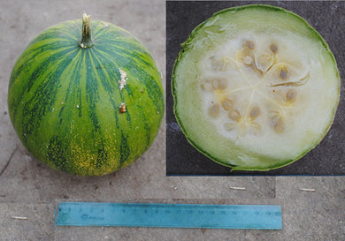 10 Seeds Cucurbita ecuadorensis Ecuadorian Squash #Vegetable