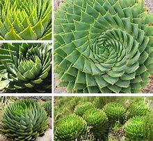 Load image into Gallery viewer, Aloe Vera Plant Seed Mix Air purification Plant's (SEEDS) #Succulent