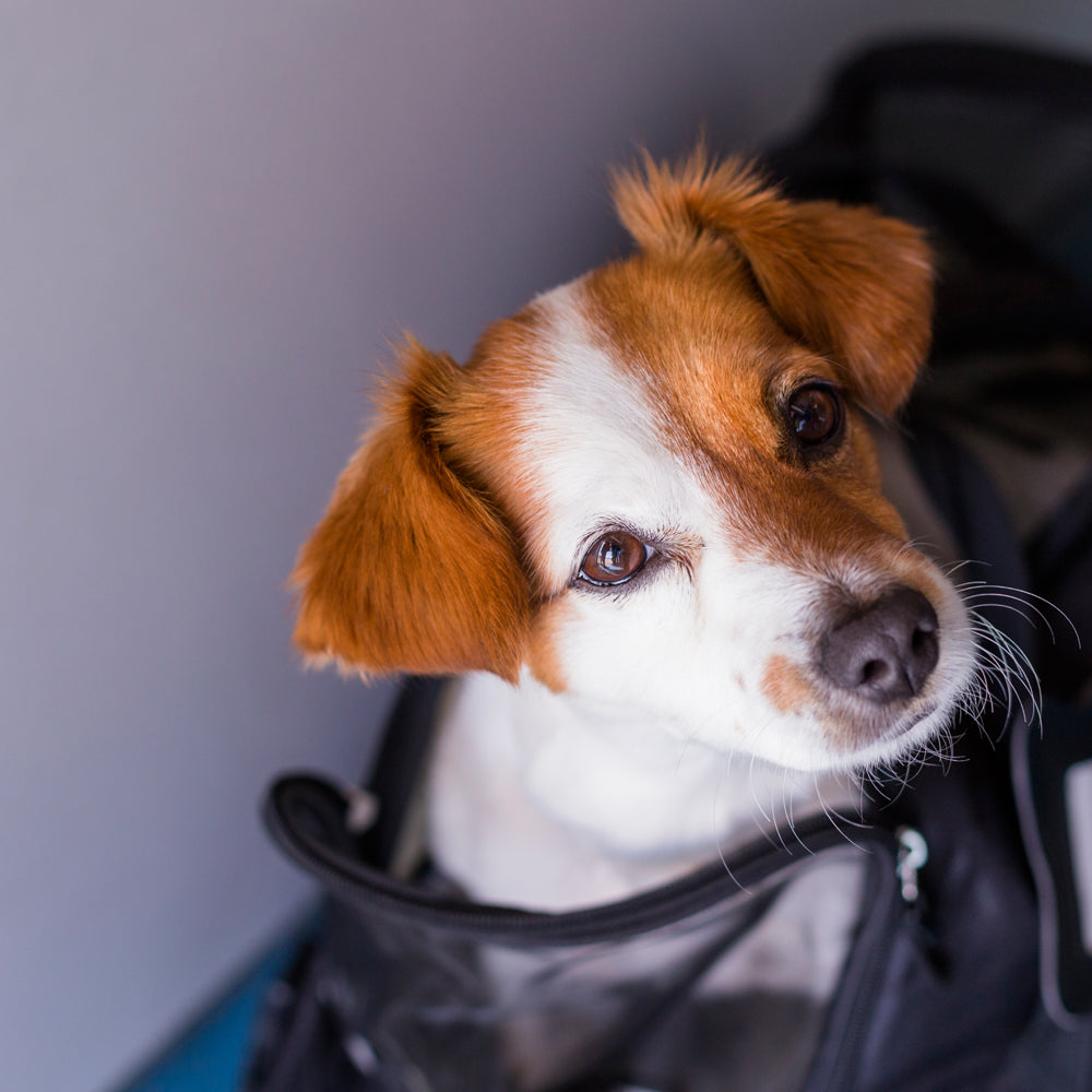 When should an Airline be Responsible for Your Harm to Your Pet