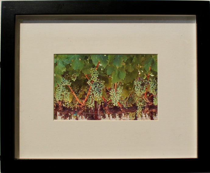 Harvest Grapes- Framed Photography