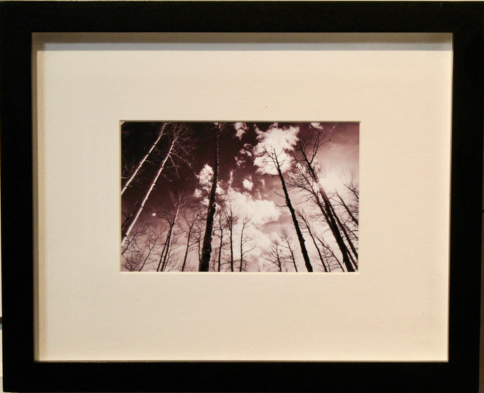 Trees Up Above- Framed Photography