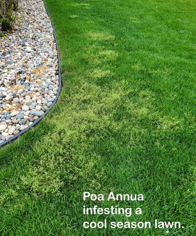 Fall Lawn Care Steps - No Grass Seed Needed