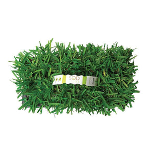 Floratam Sod Pods Grass Plugs