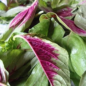 Amaranth Greens - Saute