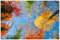 Painted Autumn Trees - Ceramic Tile Mural