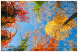 Painted Autumn Trees -  Tile Mural
