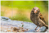 Sparrow in Birdbath -  Tile Mural